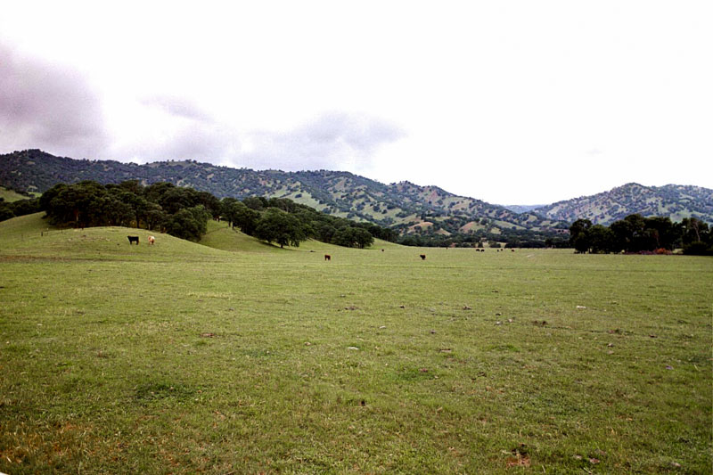 Grazing open-space. Courtesy of Solano Land Trust
